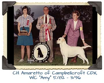 CH Amaretto of Campbellcroft CDX, WC